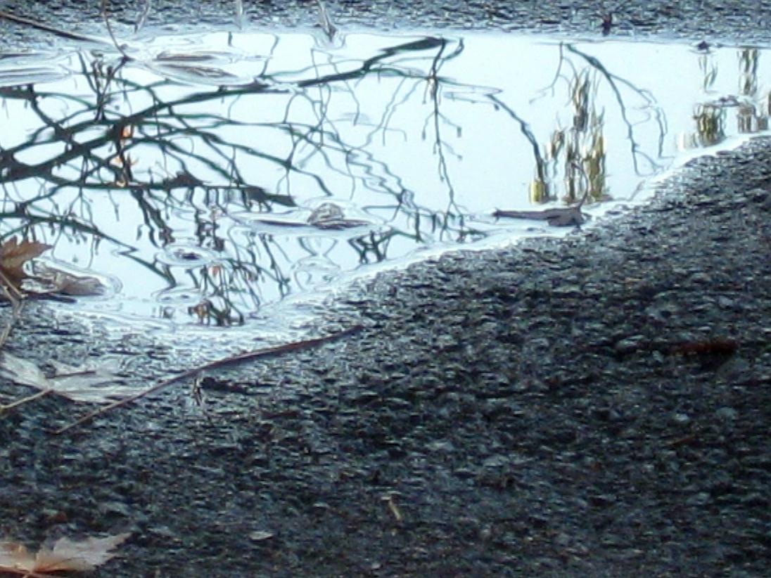 Asphalt Reflection by Karen Greenbaum-Maya