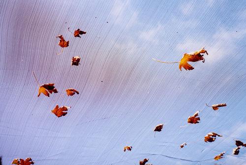Leaves on Nursery Netting by Karen Greenbaum-Maya
