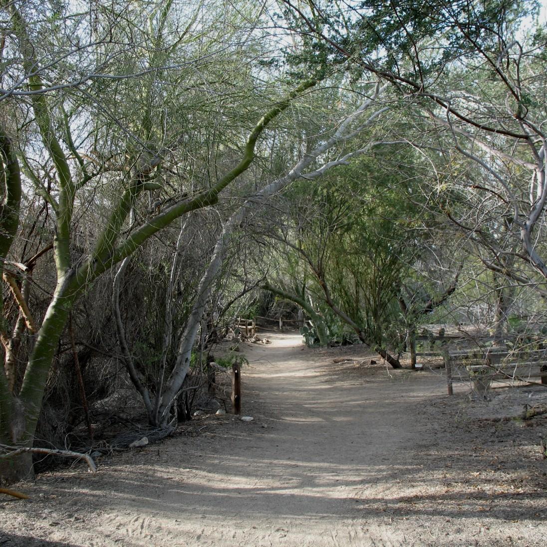 Desert Pathway by Tami Sigurdson