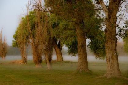 Rancho Jurupa Park by Robert Sirotnik