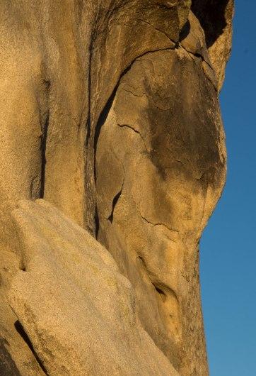Joshua Tree Rock Face by Lynn Thomas
