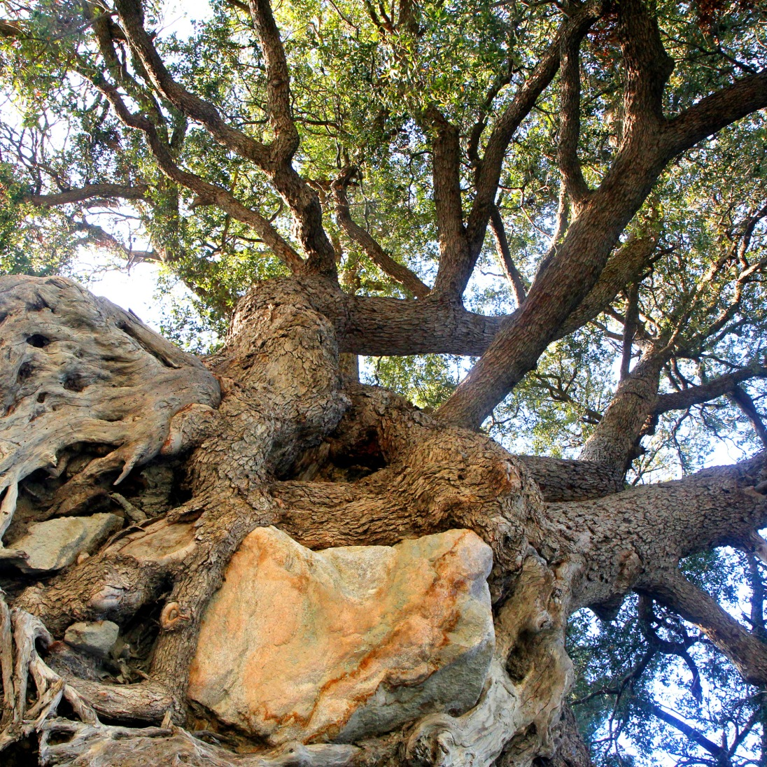 Tree with its Roots in the Air by James Ducat