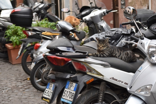 tuttle_photo_motorcats
